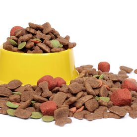 Quality Food for Dogs and Cats
