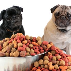 Ideal Dog Food
